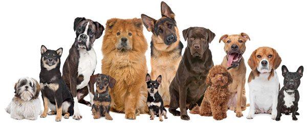 Twelve dogs sitting nicely