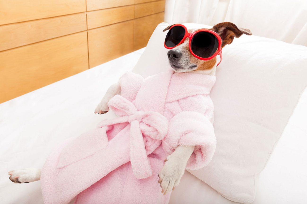 Dog in robe