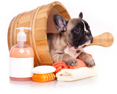 Dog in bucket