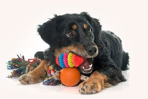 Dog with toys from Bark City Boutique