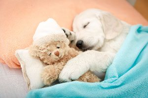 Sleeping dog with teddy bear at day care