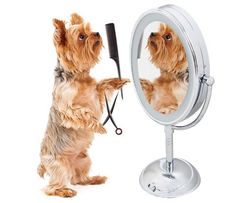 Dog with comb and scissors grooming