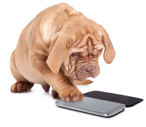 Puppy using smartphone