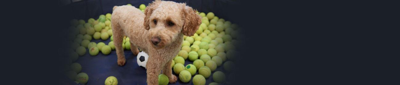 Dog Daycare & Dog Grooming | Bark City - Manchester NH