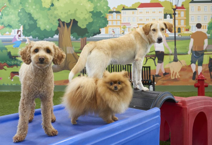Dog Daycare & Dog Grooming | Bark City - Manchester NH