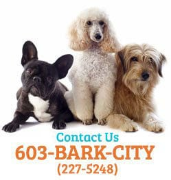Manchester NH Doggy Daycare | Welcome to Bark City