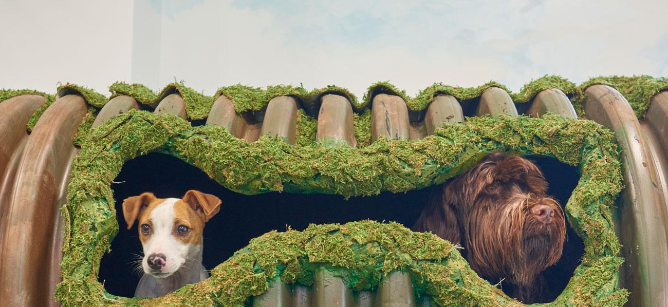 Local Dog Daycare | Nearby Doggy Daycare | Bark City